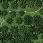 Peran Teknologi LiDAR Dalam Manajemen Kebun Kelapa Sawit